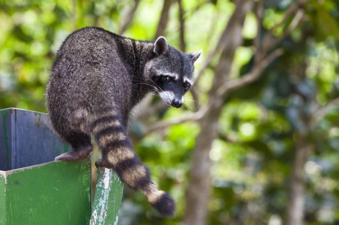 Wildlife & HOAs: How to Deal With & Prevent Problems Humanely