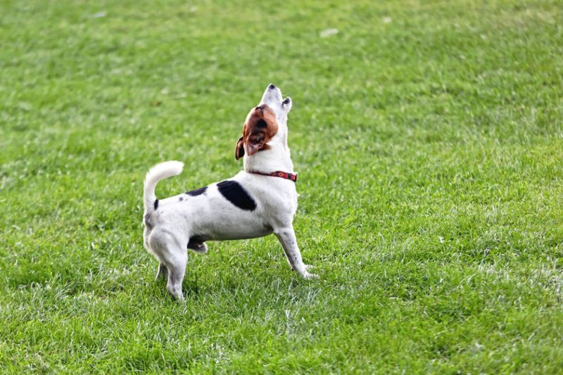 How to Handle Pet Problems in an HOA